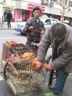 Chicken Man_2010_3