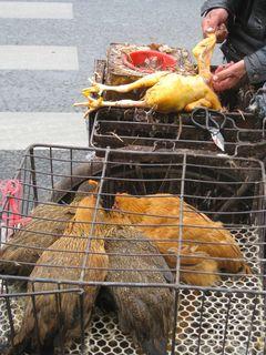 Chicken Man_2010_7