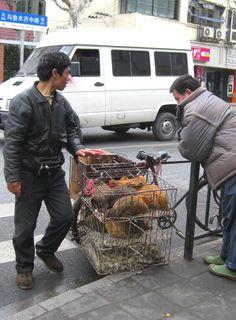 Chicken Man_2010_1