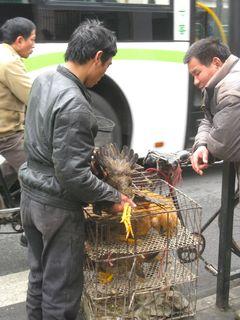 Chicken Man_2010_2