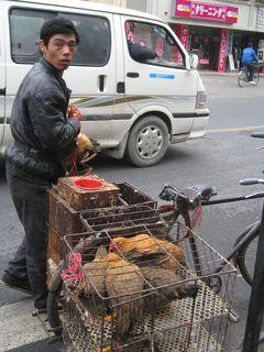 Chicken Man_2010_4