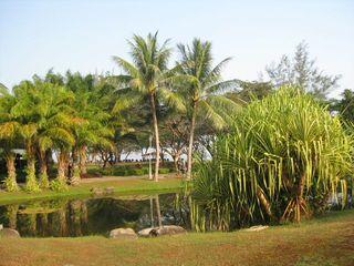 Love this Borneo