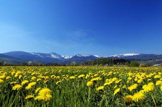 Alpine Mountain