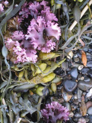 Seaweed 2010